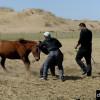Монголчууд хэрхэн адууг засдаг вэ?