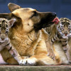 Амьтадын нөхөрлөл