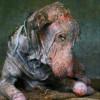 Үхэж буй нохойг аварсан сэтгэл хөдөлгөм түүх