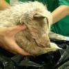 Дэлхийн хамгийн харгис араатанд тарчлуулсан амьтаныг аварсан түүх